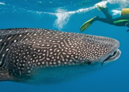 Photo from http://www.amazingdive.com/